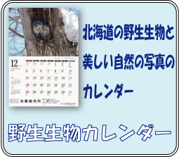 野生生物カレンダー